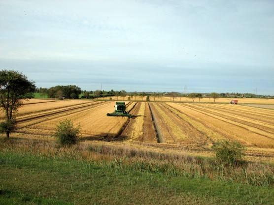 foto  Consorzio agrario in Vendita a Binasco