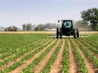 Foto - Terreno agricolo in Vendita a Correzzola