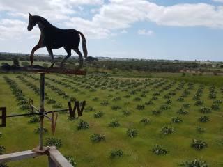 Foto - Terreno agricolo in Vendita a Galatone