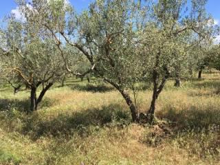 Foto - Terreno agricolo in Vendita a Sessa Aurunca