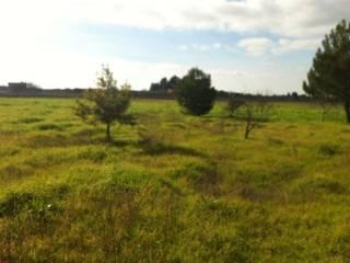 Foto - Terreno agricolo in Vendita a Guagnano