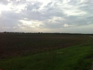 Foto - Terreno agricolo in Vendita a Salice Salentino