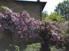 Villa Affitto Molinella