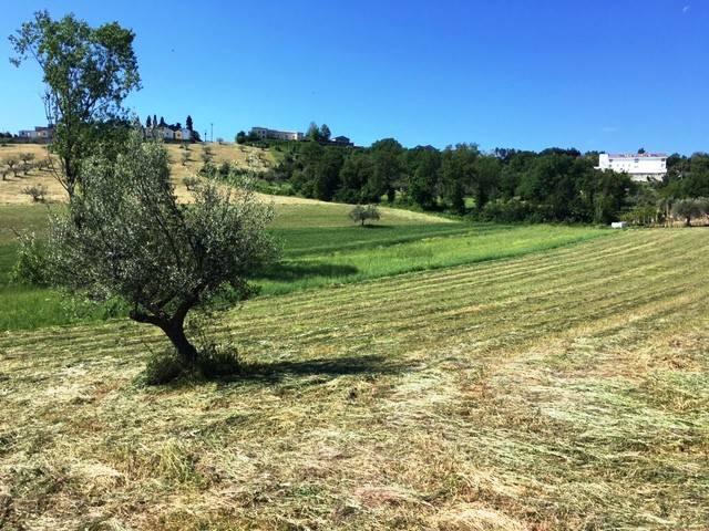 foto  Terreno agricolo in Vendita a Civitaquana