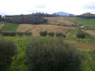 Foto - Terreno agricolo in Vendita a Castorano