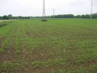 Foto - Terreno agricolo in Vendita a Concorezzo