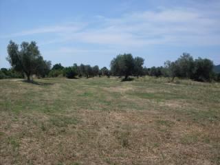 Foto - Terreno agricolo in Vendita a Canino
