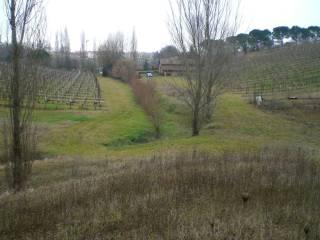 Foto - Terreno agricolo in Vendita a Dozza