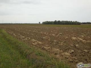 Foto - Terreno agricolo in Vendita a Ceregnano