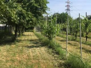 Foto - Terreno agricolo in Vendita a Rho
