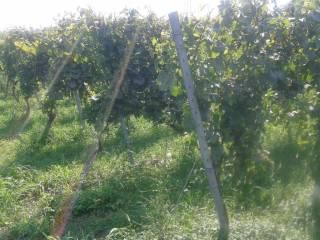 Foto - Terreno agricolo in Vendita a Adro