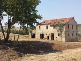 Foto - Rustico / Casale, da ristrutturare, 83150 mq, Offida