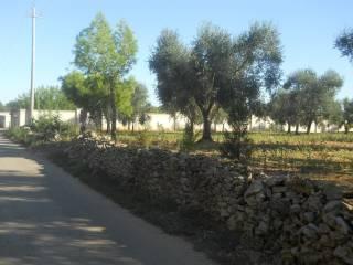 Foto - Terreno agricolo in Vendita a Cellino San Marco