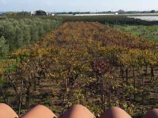 Foto - Rustico / Casale, buono stato, 2537 mq, Trani