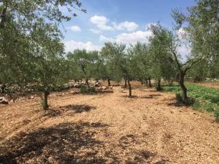 Foto - Terreno agricolo in Vendita a Grumo Appula