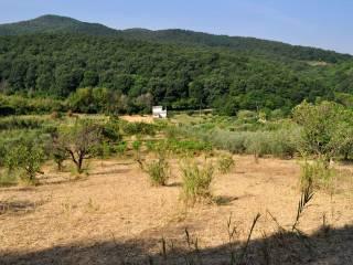 Foto - Terreno agricolo in Vendita a Palombara Sabina