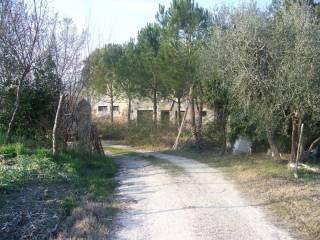 Foto - Rustico / Casale via Mercatale 45, Belvedere Ostrense