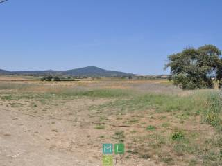 Foto - Terreno agricolo in Vendita a Capalbio