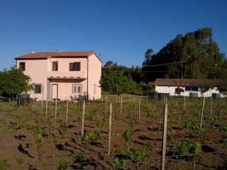 Foto - Vendita Rustico / Casale buono stato, Siamanna, Sardegna Centro Occidentale