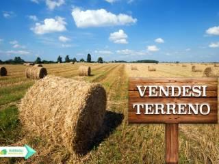 Foto - Terreno agricolo in Vendita a Foiano della Chiana