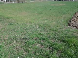 Foto - Terreno agricolo in Vendita a Maserada sul Piave