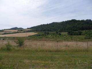 Foto - Terreno agricolo in Vendita a Borgo Tossignano
