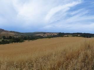 Foto - Rustico / Casale, nuovo, 150 mq, Saturnia, Manciano