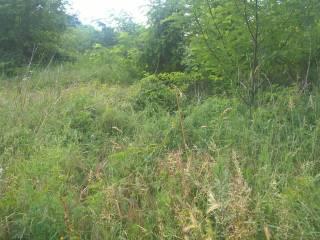 Foto - Terreno agricolo in Vendita a Fara Gera d'Adda