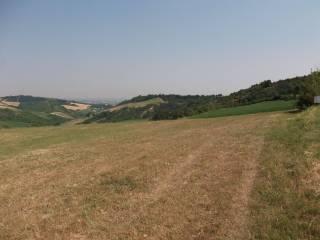 Foto - Terreno agricolo in Vendita a Castel San Pietro Terme