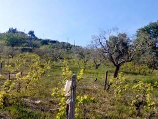 Foto - Terreno agricolo in Vendita a Tricarico