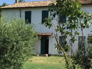 Foto - Rustico / Casale via Vicoli 113, Borgo Montone, Ravenna