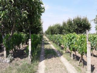 Photo - Agricultural land for Sale in Foggia