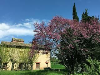 Foto - Rustico / Casale Contrada Santissimo Crocifisso, Treia