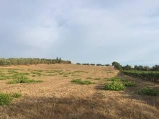 Foto - Terreno agricolo in Vendita a Albano Laziale