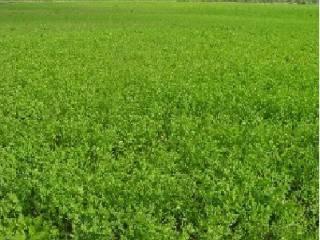 Foto - Terreno agricolo in Vendita a Gradara