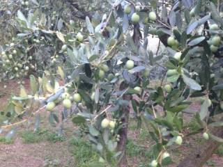 Foto - Terreno agricolo in Vendita a San Pietro in Cariano