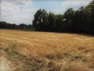 Foto - Terreno agricolo in Vendita a Città di Castello