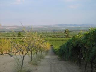Foto - Terreno agricolo in Vendita a Canosa di Puglia