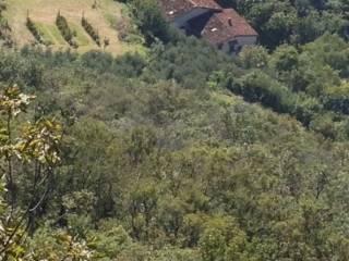 Foto - Terreno agricolo in Vendita a Barbarano Vicentino