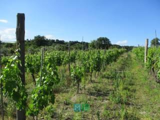 Foto - Terreno agricolo in Vendita a Farnese
