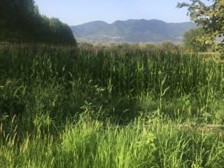 Foto - Terreno agricolo in Vendita a Pietravairano