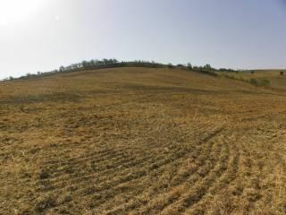 Foto - Terreno agricolo in Vendita a Tarquinia