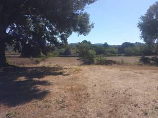 Foto - Terreno agricolo in Vendita a Oriolo Romano
