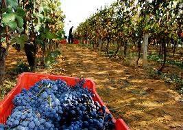 Foto - Terreno agricolo in Vendita a Novello