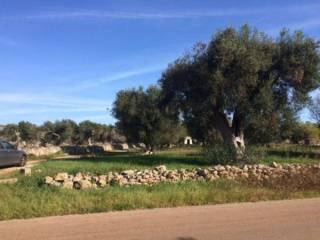 Foto - Terreno agricolo in Vendita a Presicce