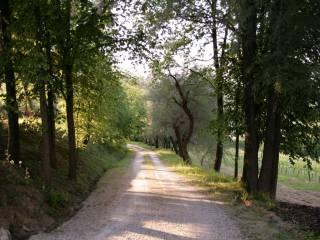 Foto - Terreno agricolo in Vendita a Montiano