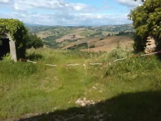 Foto - Terreno agricolo in Vendita a Montappone