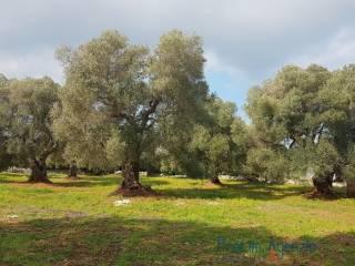 Foto - Terreno agricolo in Vendita a San Filippo del Mela