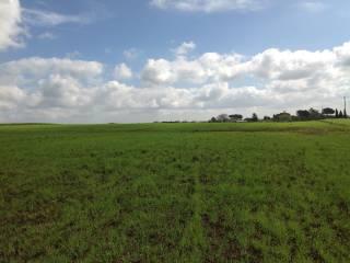 Foto - Terreno agricolo in Vendita a Cesenatico
