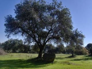 Foto - Terreno agricolo in Vendita a Carbonia